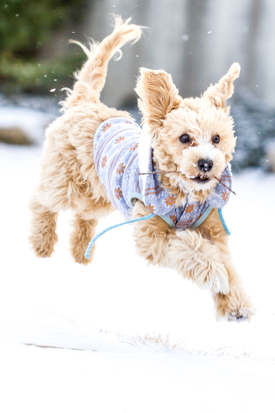 Beautiful stock photos of hunde, Animal Themes, Cold Temperature, Covered, Covering