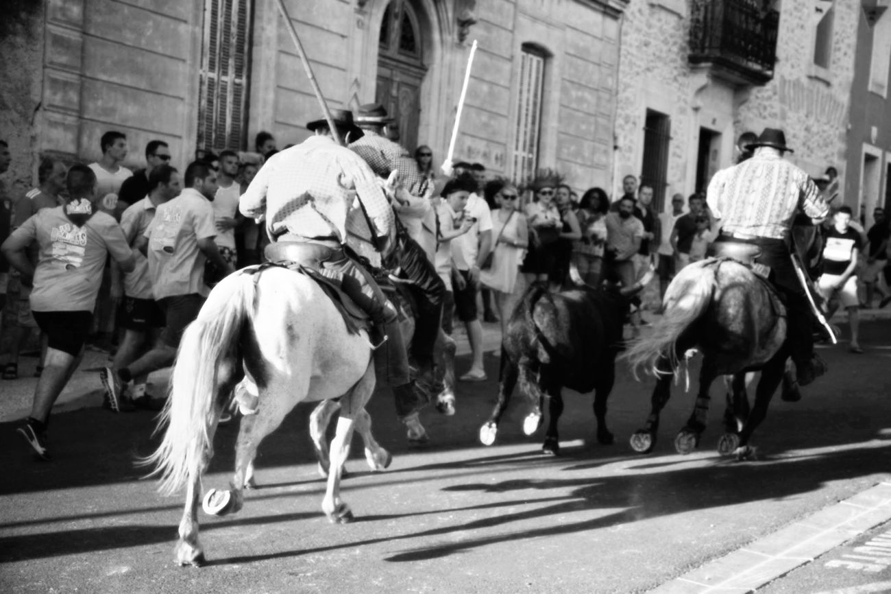 Toros Horses Gardian Blackandwhite Monochrome Shades Of Grey Streetphotography Southoffrance Camargue Bandido