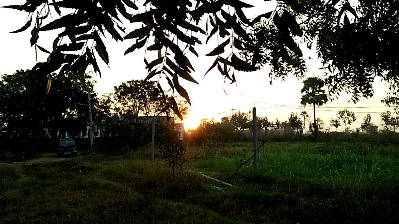 Sunset view from my farmhouse... Sunset Tree Grass Tranquility Beauty In Nature Silhouette Field No People Nature Scenics Rural India Rural_love Rural_living My Farm Life RuralExploration EyeEm Best Shots EyeEm Incredible India Malephotographerofthemonth IMography Something I Like My Smartphone Life Mobliephotography Eyeem Market EyeEm Gallery With Love From India💚 ....truly....urs.... Nitin