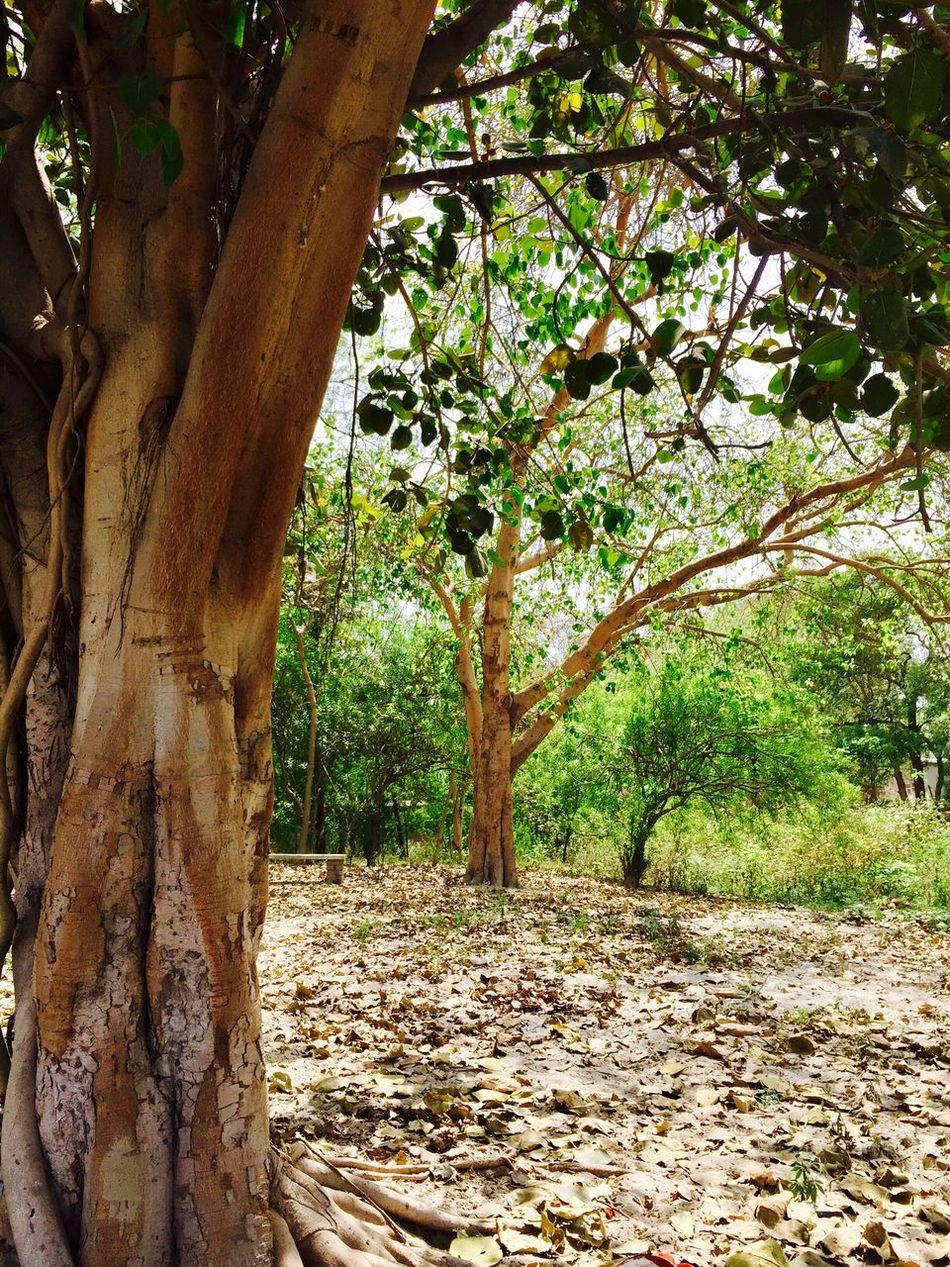 Nature India First Eyeem Photo