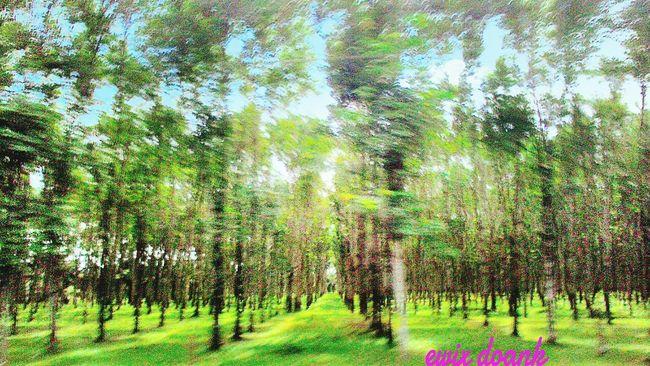 Perkebunan karet, Relaxing , Hello World , Nature_collection ,,tree Hunging A Tree