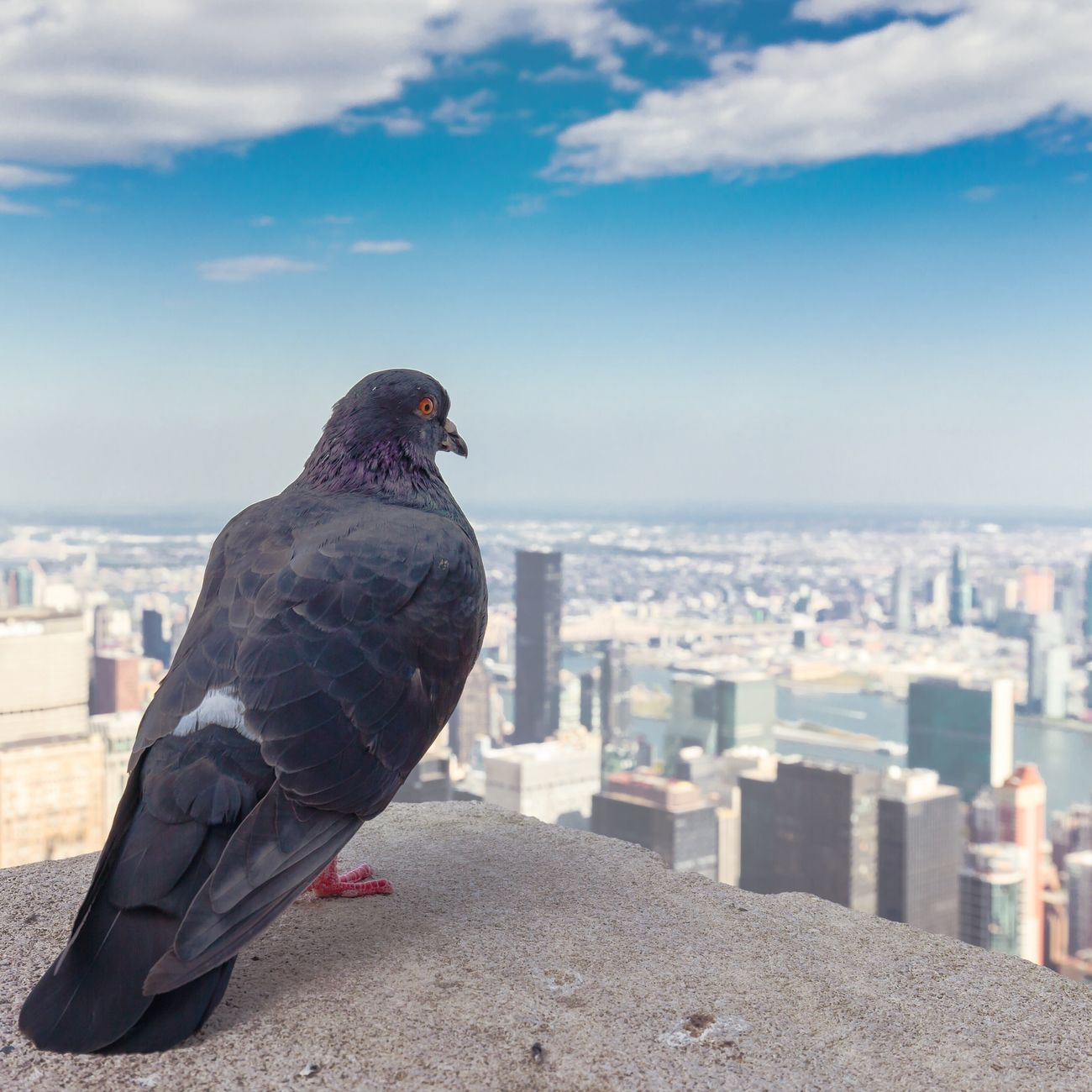 Rooftop Meditation | shot in New York City Bird Animal Themes Sky One Animal Building Exterior Architecture Built Structure City Day Sea Animals In The Wild Outdoors Cityscape No People Nature Cloud - Sky Perching Retaining Wall Adapted To The City