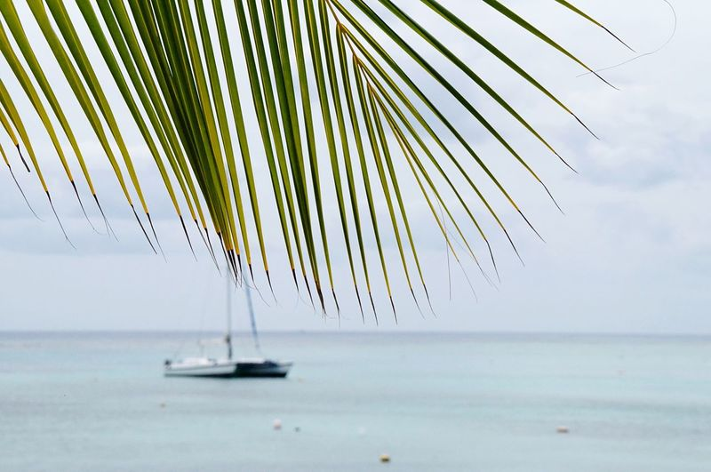 Sea Nature Horizon Over Water Water Beauty In Nature Tranquility Scenics Tranquil Scene Sky Outdoors Day No People Palm Tree Tree Mexico Katamaran Catamaran Sailing Ship