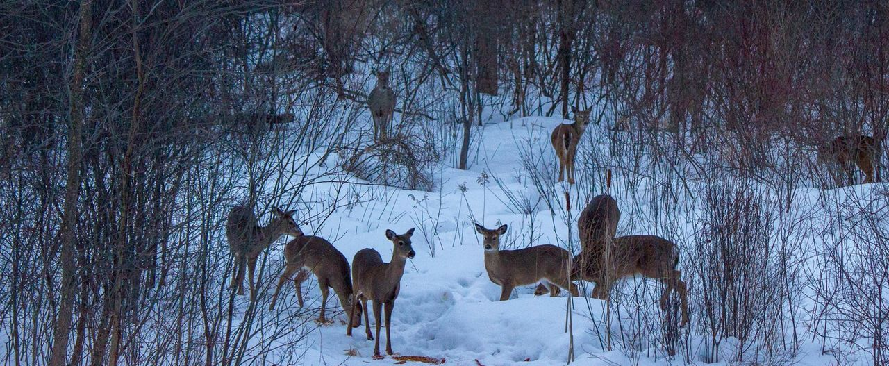 Michigan - 2014 Animal Themes Cold Cold Temperature Deer Family Of Deer Five Ani Large Group Of Objects Michigan Multiple Animals No People Pack Pure Pure Michigan Side By Side Weather Whitetail Deer Wildlife Winter