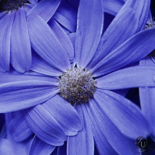 Flowers Nature Macro Eye4photography