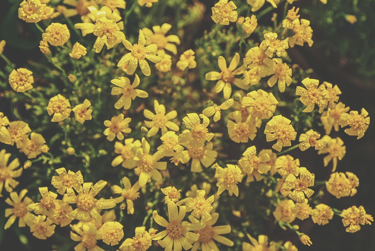 flower, nature, plant, growth, day, outdoors, beauty in nature, freshness, yellow, no people, tranquility, fragility, blooming, flower head, close-up