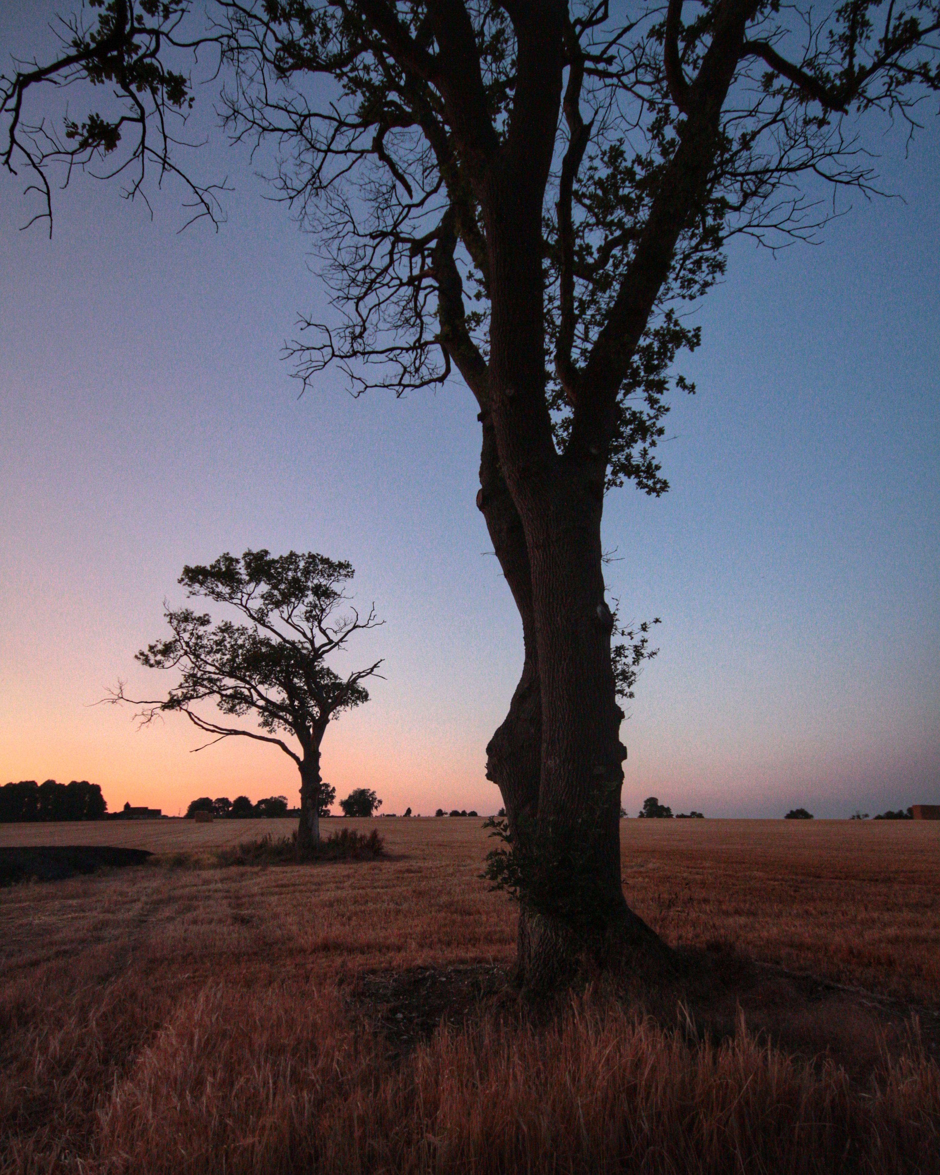 bare tree, tree, landscape, tranquility, field, tranquil scene, scenics, branch, nature, clear sky, beauty in nature, grass, tree trunk, rural scene, sky, non-urban scene, solitude, horizon over land, silhouette, growth