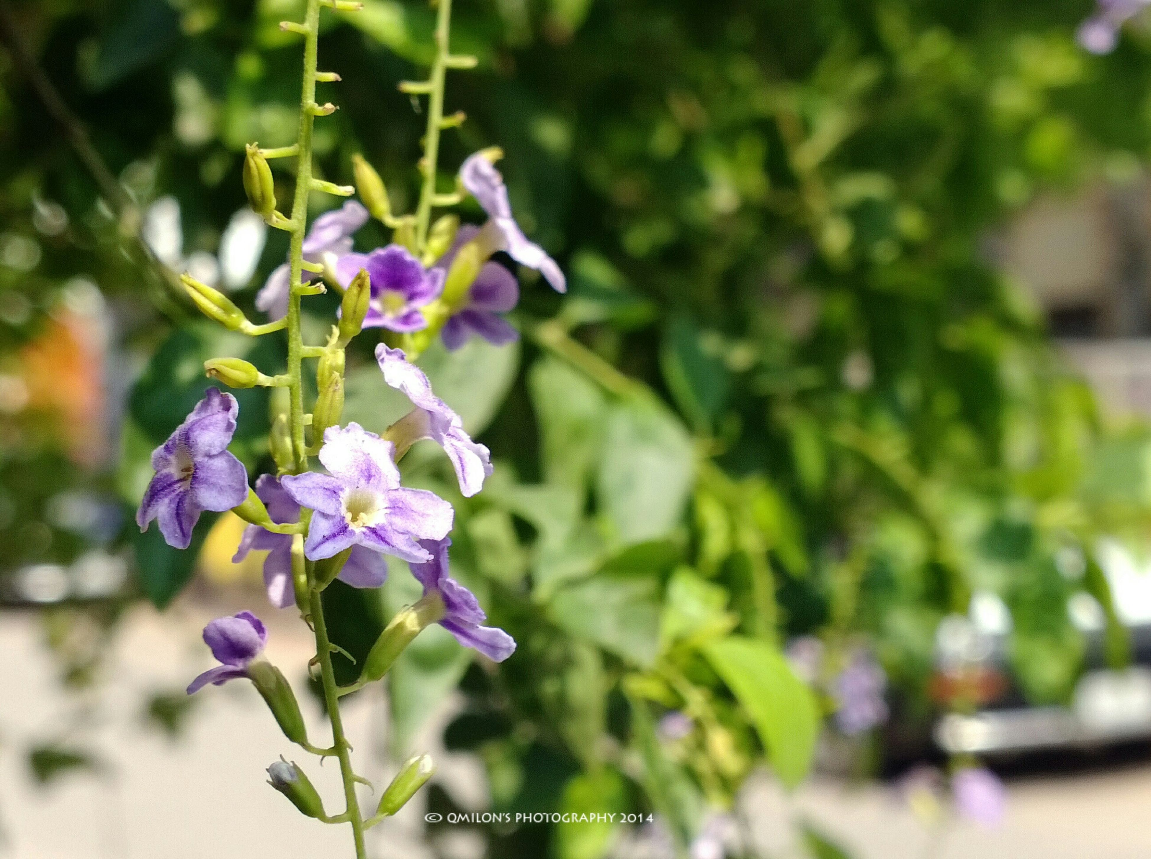 flower, freshness, fragility, growth, purple, focus on foreground, petal, plant, close-up, beauty in nature, blooming, flower head, stem, nature, in bloom, blossom, selective focus, outdoors, bud, day