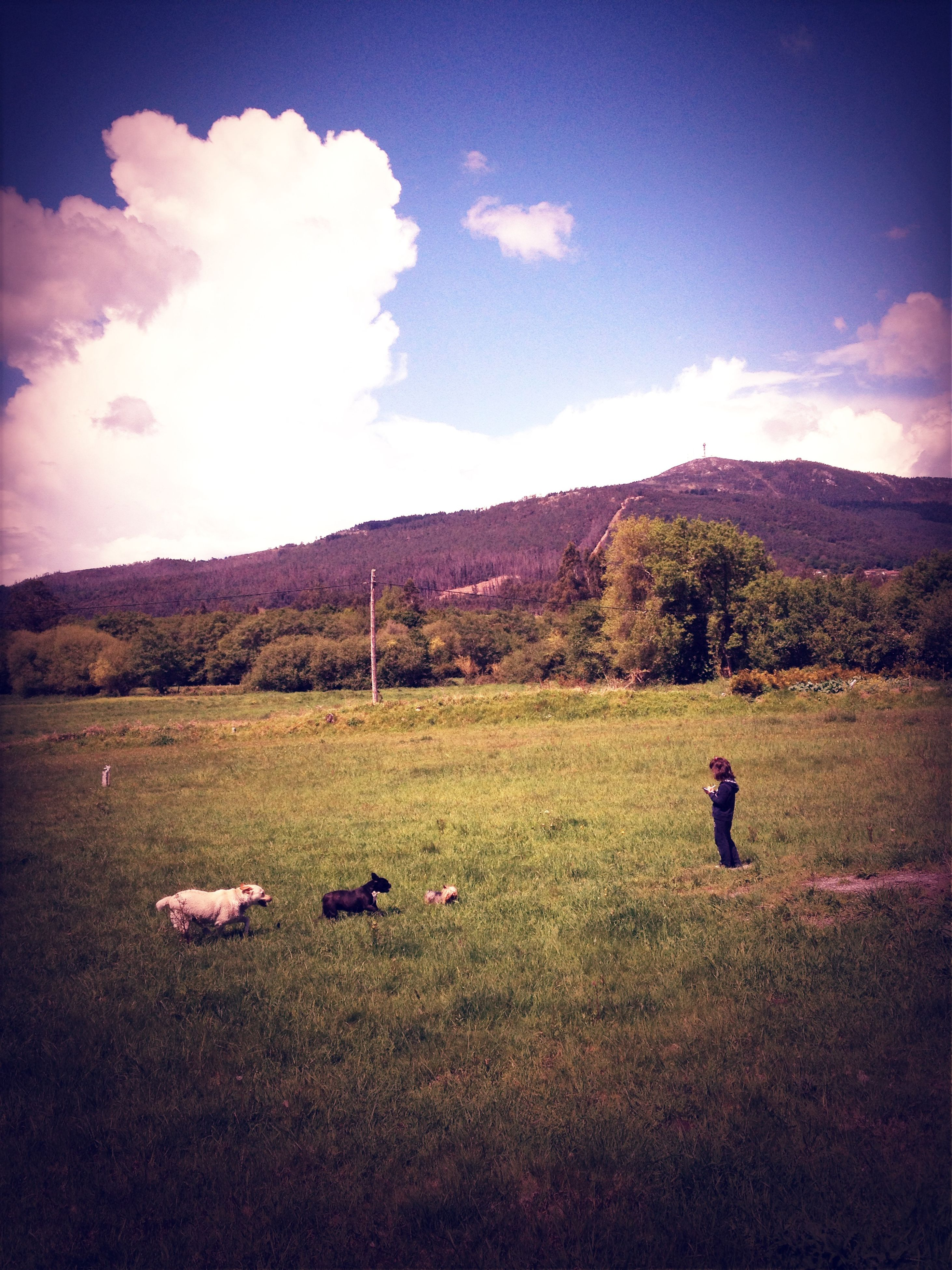 sky, mountain, domestic animals, landscape, grass, animal themes, tranquil scene, cloud - sky, field, tranquility, scenics, nature, beauty in nature, mountain range, cloud, mammal, dog, one animal, pets, full length