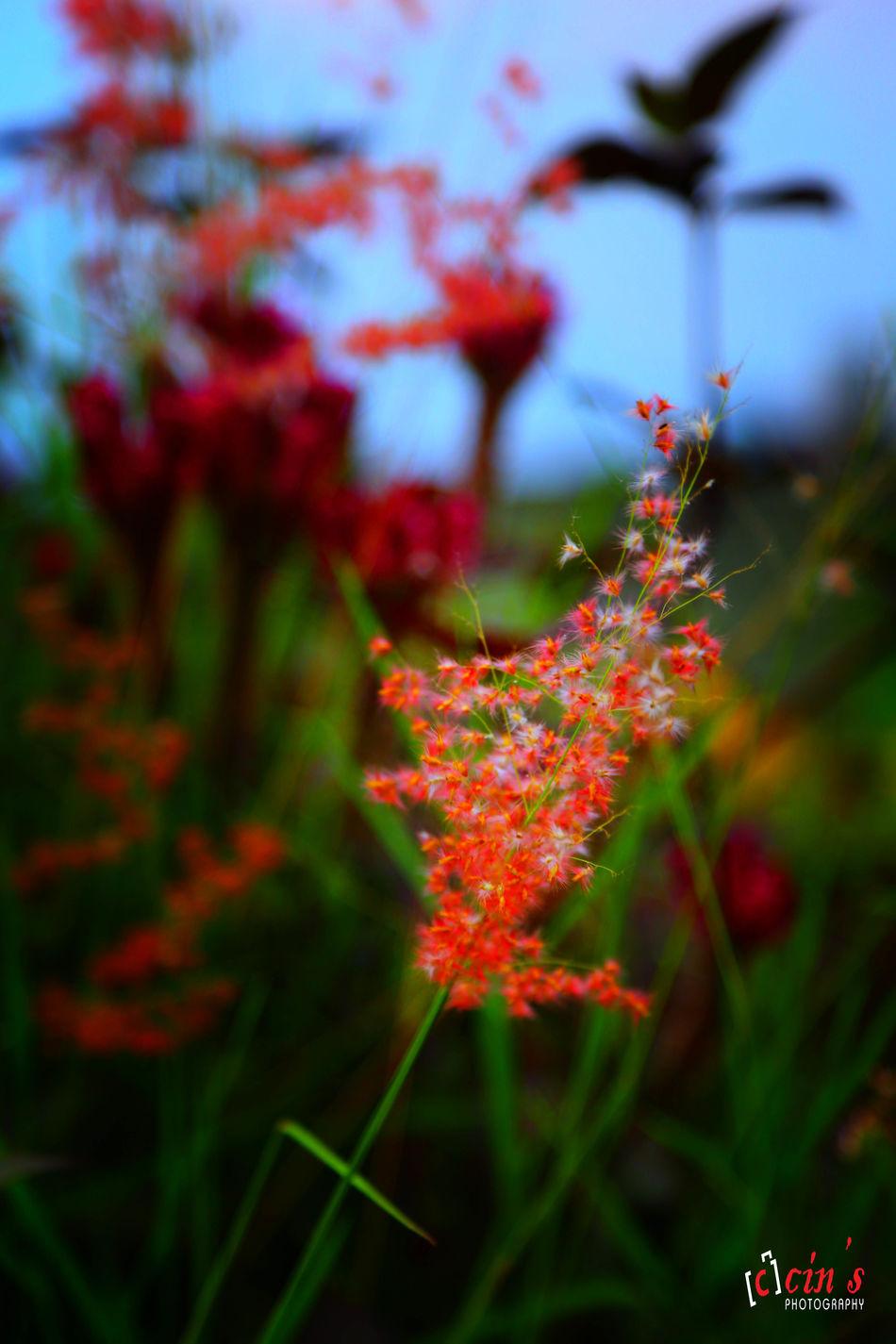 EyeEm Nature Lover EyeEm Best Shots Nature_collection Flowerporn