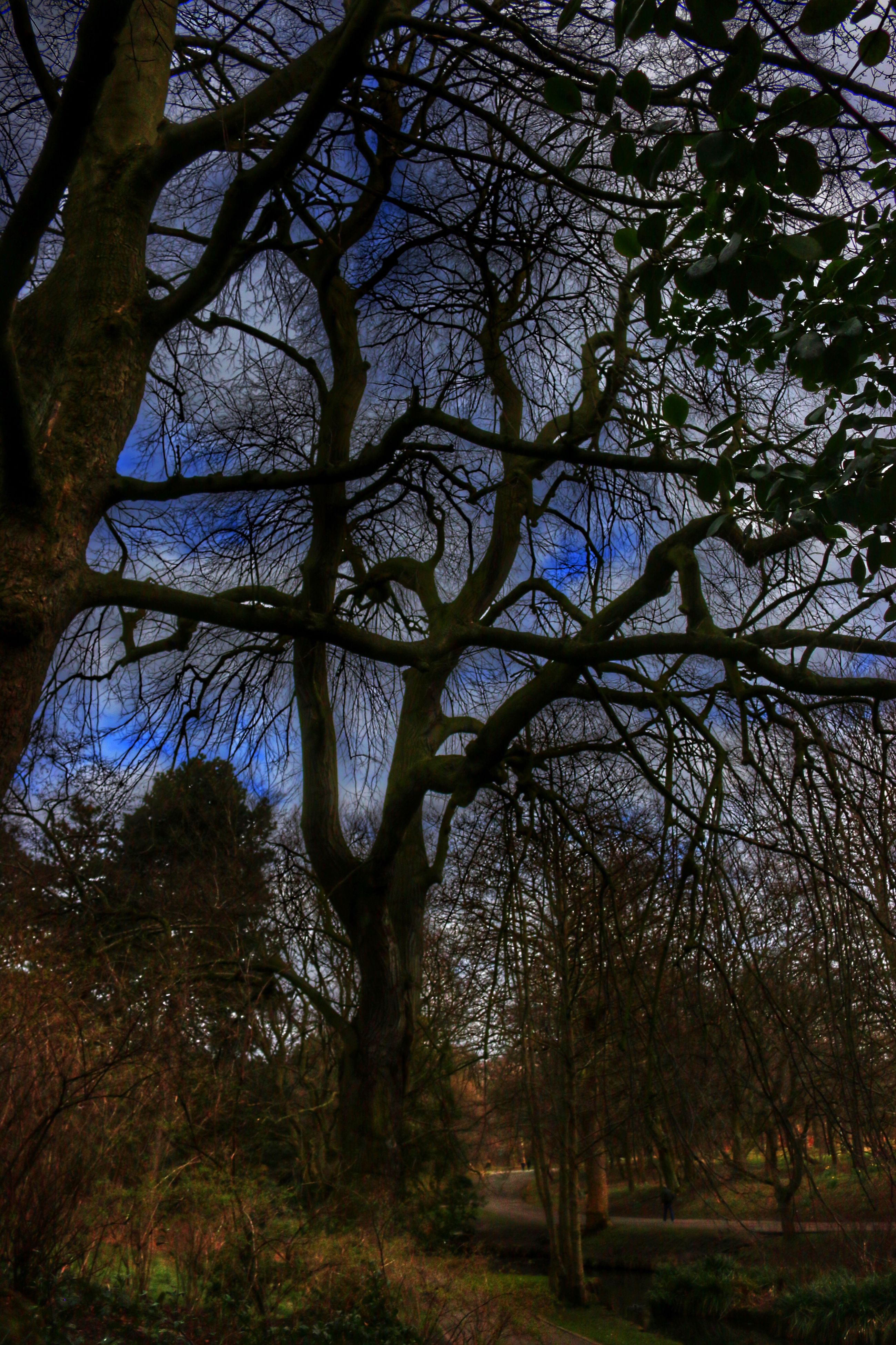 tree, branch, growth, low angle view, tranquility, nature, tree trunk, beauty in nature, tranquil scene, bare tree, sky, green color, scenics, day, outdoors, no people, forest, field, grass, park - man made space