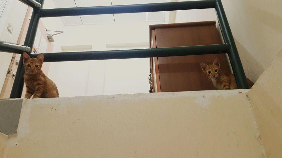 First Eyeem Photo Cats Staring