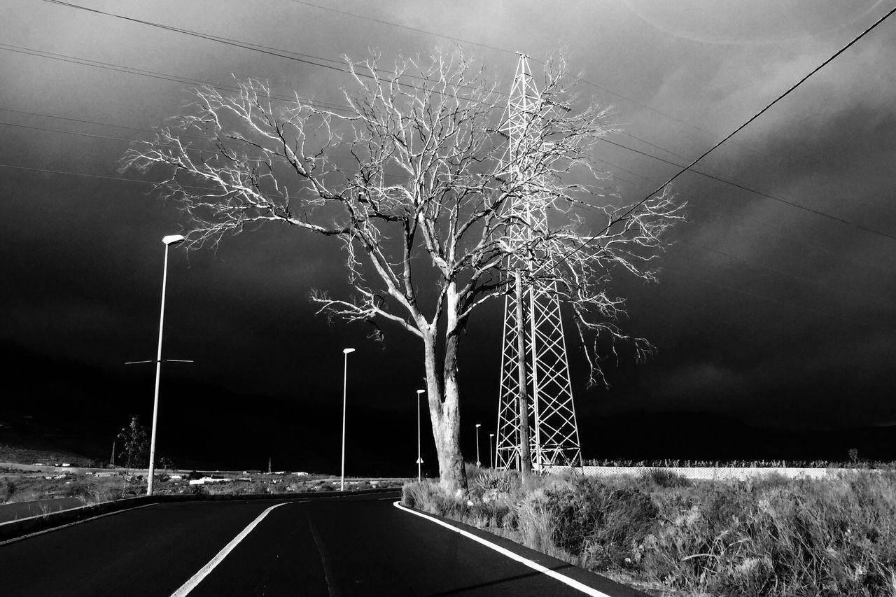 Blancoynegro Blackandwhite Monochrome NEM Black&white Streetphotography Ontheroad IPhoneography Streetphoto_bw Driving Contrast Tree Trees