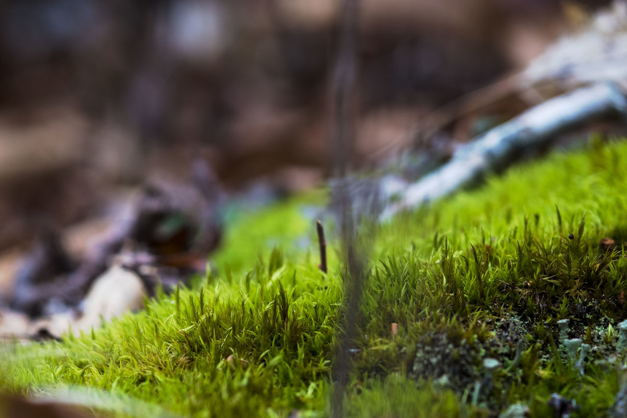 Close-up Growing Growth Macro Macro Nature Macro Photography Macro_collection Moss Nature Nature Photography Nature_collection No People Outdoors Plant Plants Landscapes With WhiteWall