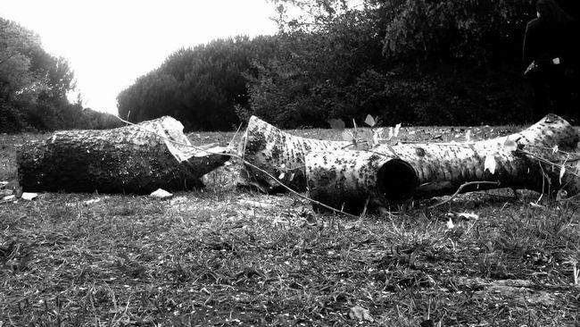Tronco Y Musgo Tronco árvore Morta Arvore Pretoebranco Preto & Branco