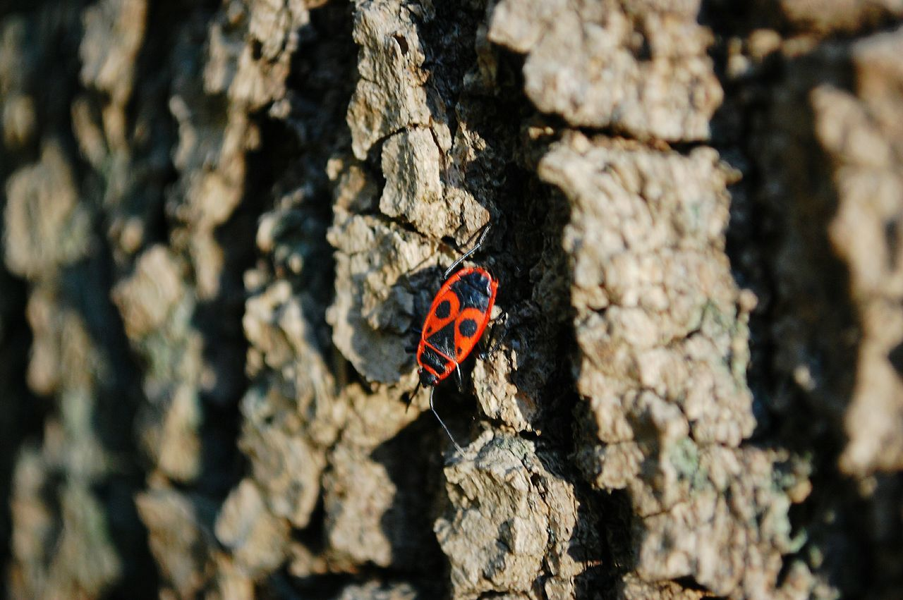 animals in the wild, insect, one animal, animal themes, textured, no people, tree trunk, day, outdoors, close-up, rough, animal wildlife, butterfly - insect, nature, red
