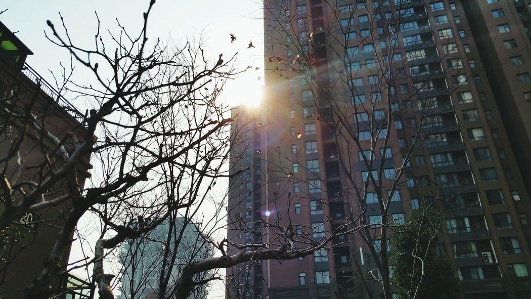 Let's count the bird. Enjoying Life Relaxing Blue Sky Hey :) Showcase: February Sunshine Morning