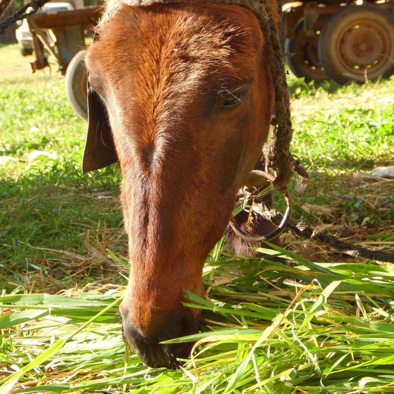 Animal Animal Body Part Animal Head  Animal Themes Animals In The Wild Cheval Close-up Day Domestic Animals Elephant Field Grass Mammal Mule Nature No People One Animal Outdoors Tete De Mule Trunk