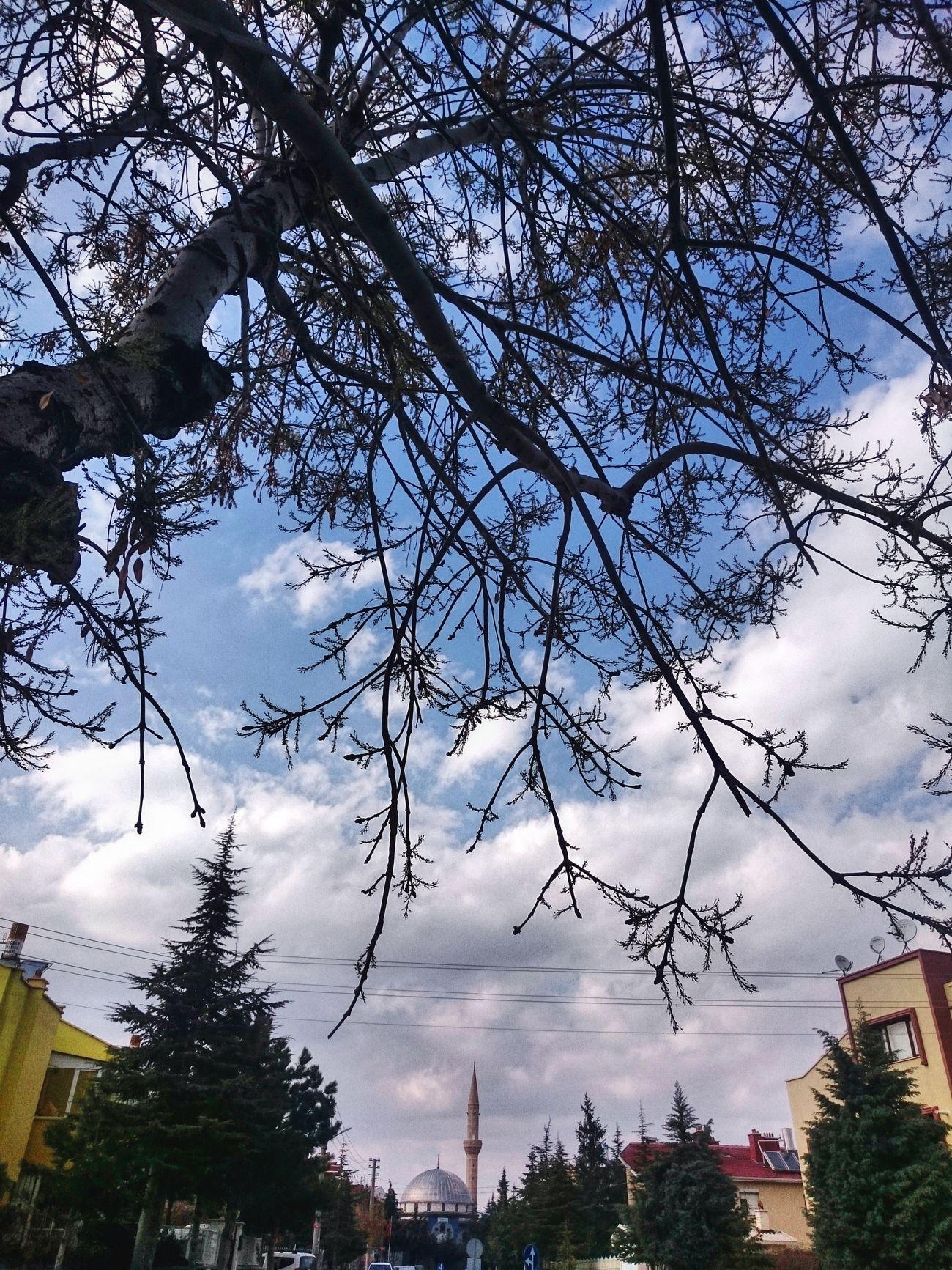 Tree Sky Nature Cloud - Sky City Skyscraper Day Konya Konyagram Konyainstagram Konya Turkey Sony Xperia Z3 Compact Sun ☀ Bahar