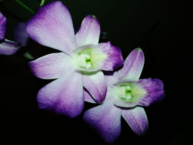 """""""Beauty that God's created What I Value Beautiful Nature Orchids Flowers Flower Porn Macro Photography Open Edit"""