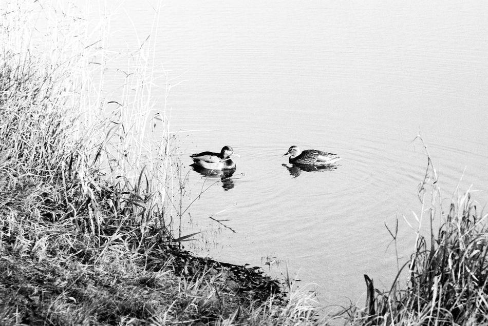 Location: Volksbad Canon EOS 50E   APX 100 -> 200   D-76 AgfaPhoto APX 100 (new) Black And White Blackandwhite Canon EOS 50E EyeEm Best Shots - Black + White Kodak D-76 Monochrome Nature Water Wildlife
