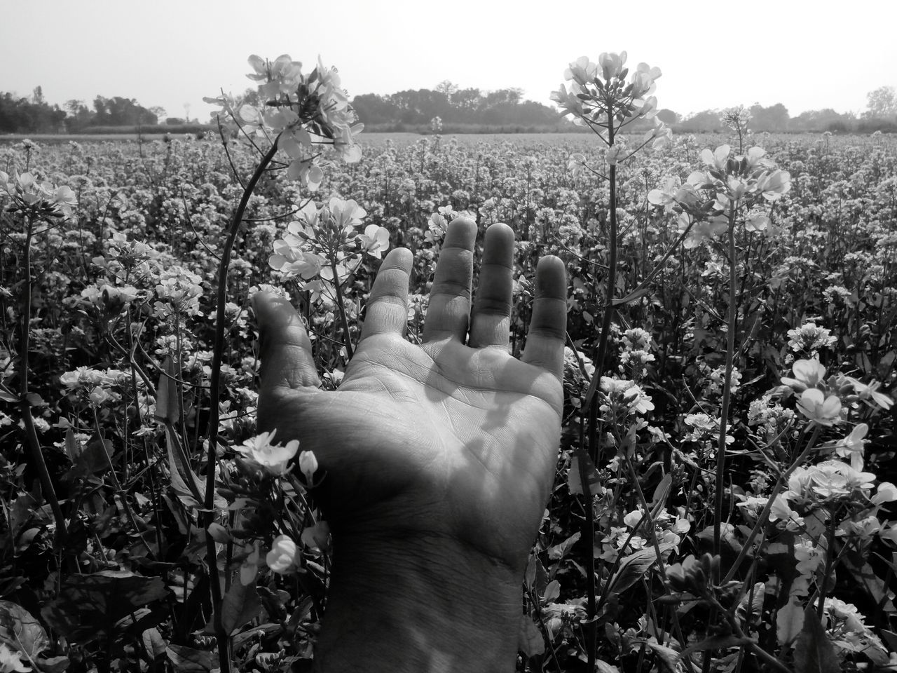 Cropped Hand Of Man Amidst Flower On Field