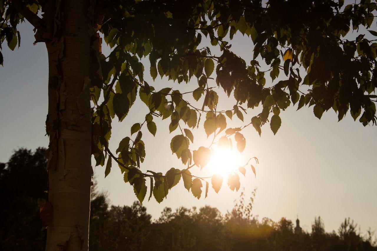 """I miss summer!!!"" Autumn Beauty In Nature Branch Day Enjoying Life Enjoying The Sun Green Leaves Light Light And Shadow Nature Nature Nature_collection No People Outdoors Shadow Shadows & Lights Sky Sun Sun Light Sunbeam Sunlight Through Trees Sunset Tree Tree"