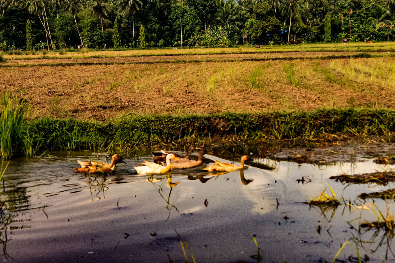 Reflection Nature No People Water Day Outdoors Growth Tranquility Lake Beauty In Nature Animal Themes Tree Grass Bird Eyeem Philippines Travelphotography Captured Moment Canonphotography Eyeemphotography Philippines