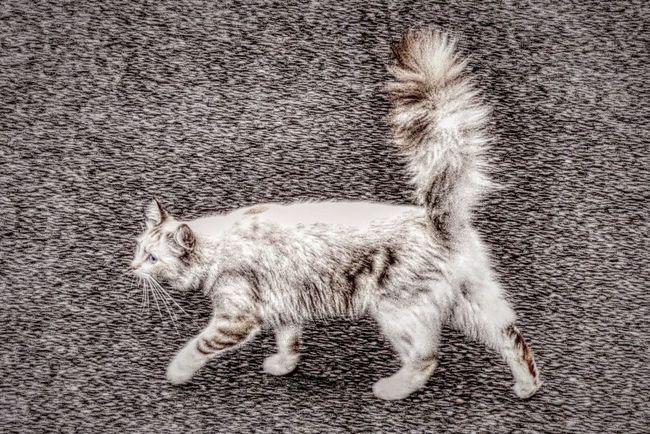En Balade avec Mon Ami Le Chat Chat Cat Cats Of EyeEm CHATFIE Catfie Cat's Eyes