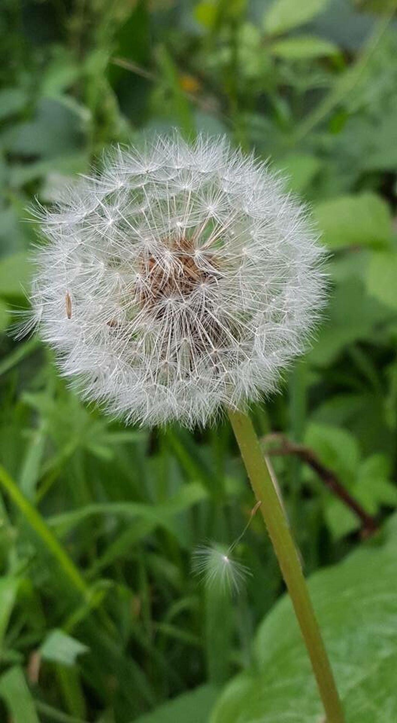 Make a wish! EyeEm Best Shots ATouristInMyOwnCity TheSidewalksOfTheCity ScenesFromTheStreet