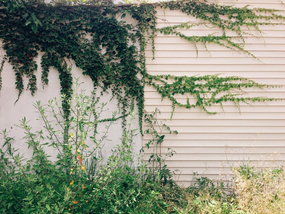 Beautiful stock photos of weed, Built Structure, Climbing Vine, Close-Up, Day