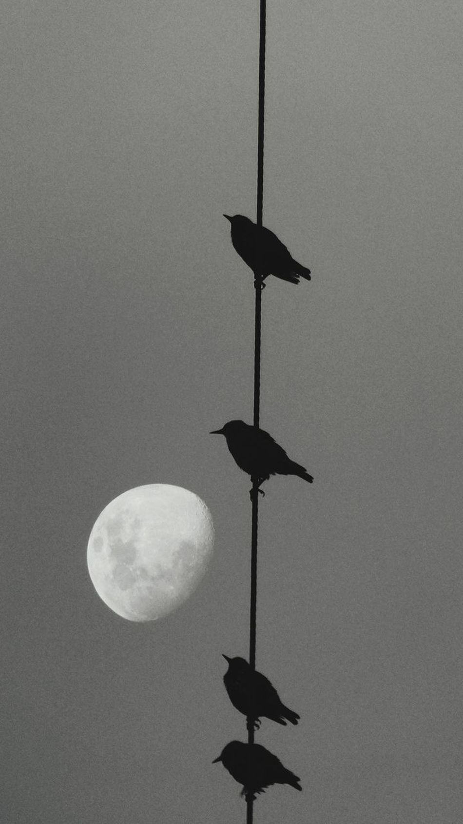 Lunar Creativity Lunar Photography Moon Moon Hanging Low Angle View No People Outdoors Bird Nature Sky Astronomy Silhouette Abstraction In Black And White