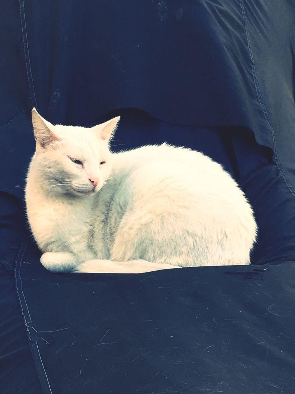 Animal Themes One Animal Feline Cat No People Street Cat Street Cats Cat♡ Cat Lovers Cats Cats Of EyeEm
