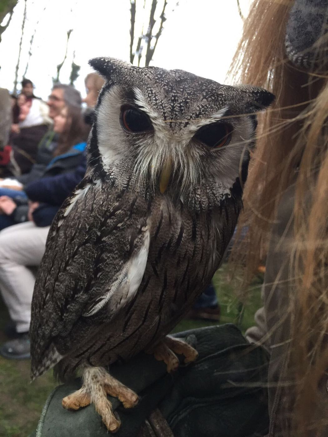 The stare into your soul - medieval market in Mannheim Falkner Der Herzen Owls Medieval MPS  Close-up Animal Wildlife Nighthunting EyeEmNewHere