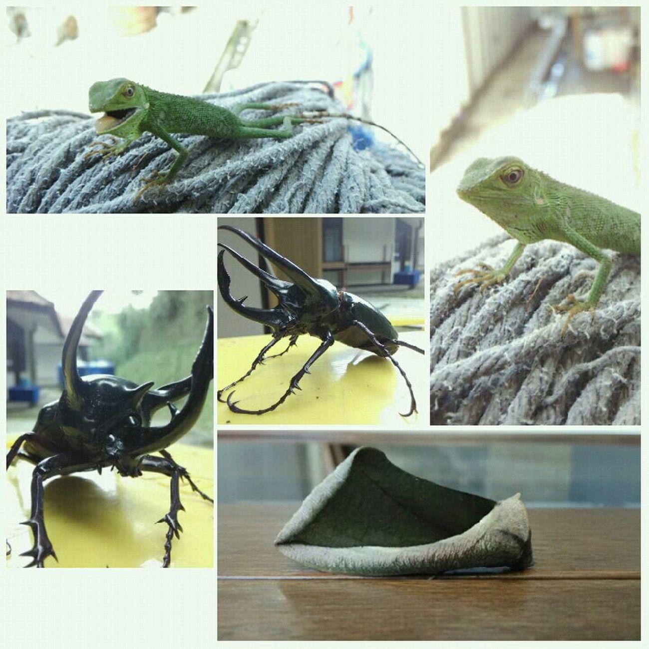 ada yg tau cara memelihara raja Kumbang ,bayi Kupukupu dan bayi Bunglon ?