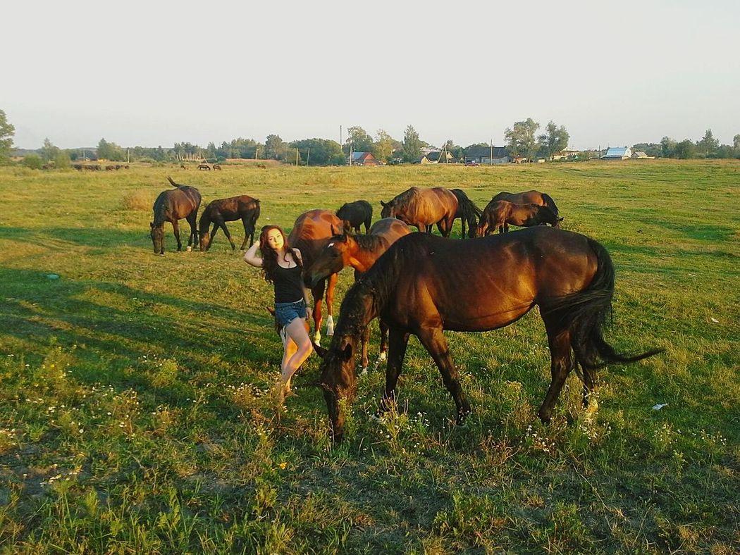 Horses Horse Sun Mobile Photography VSCO Vscocam Msco