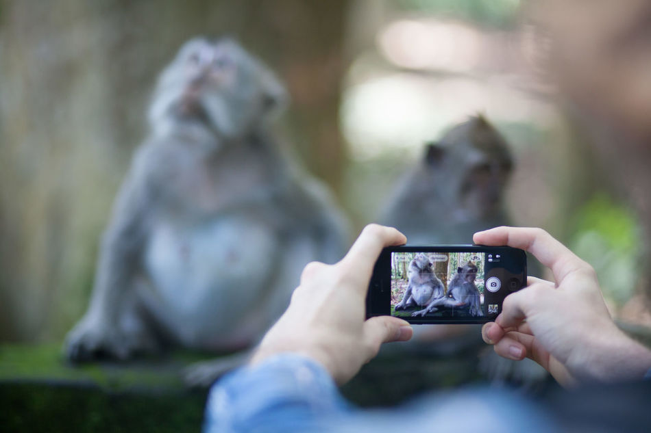 Beautiful stock photos of digital, Animal Themes, Cellphone, Clicking, Close-Up