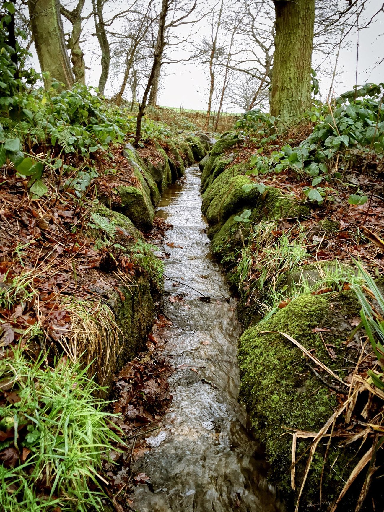 Stream Winter Walk Flaura And Fauna Winter Landscape Rain Day January2016 Biddulph Country Park Biddulph Staffordshire Moorlands Rainy Walks Winter Colors Cold Days English Countryside