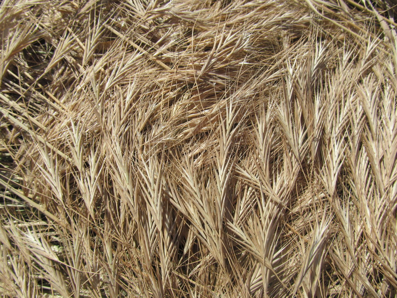 View Of Crop In Field
