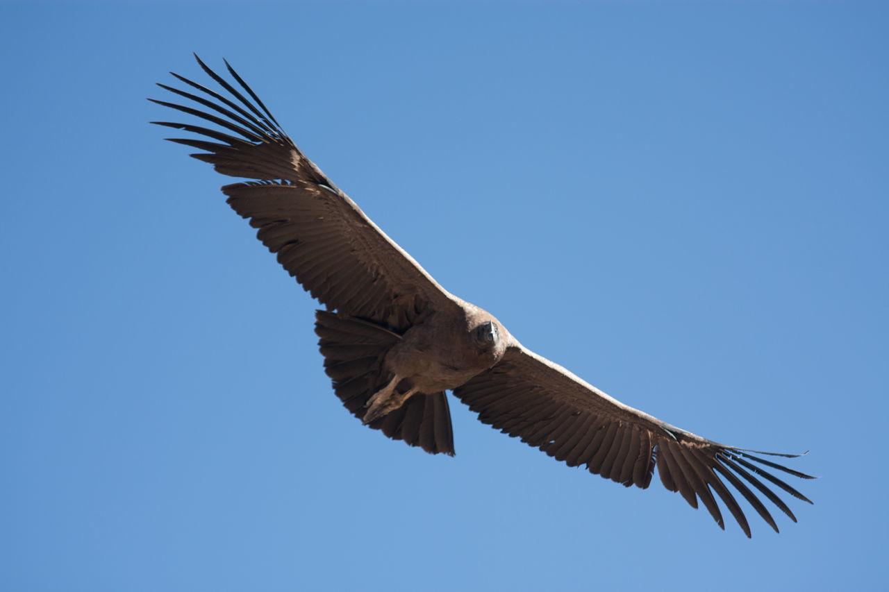 Beautiful stock photos of eagle, Animal, Animal Themes, Animals In The Wild, Avian