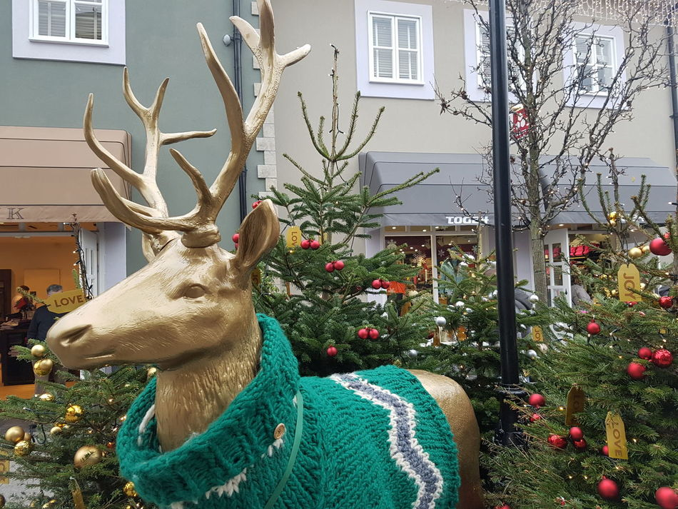 Christmas jumpers for everyone Tree Antler Celebration Christmas Tree Christmas Decoration Outdoors Animal Themes Branch No People Winter Christmas Day Kildarevillage Samsung Galaxy S7 Raindeer Xmas Jumper