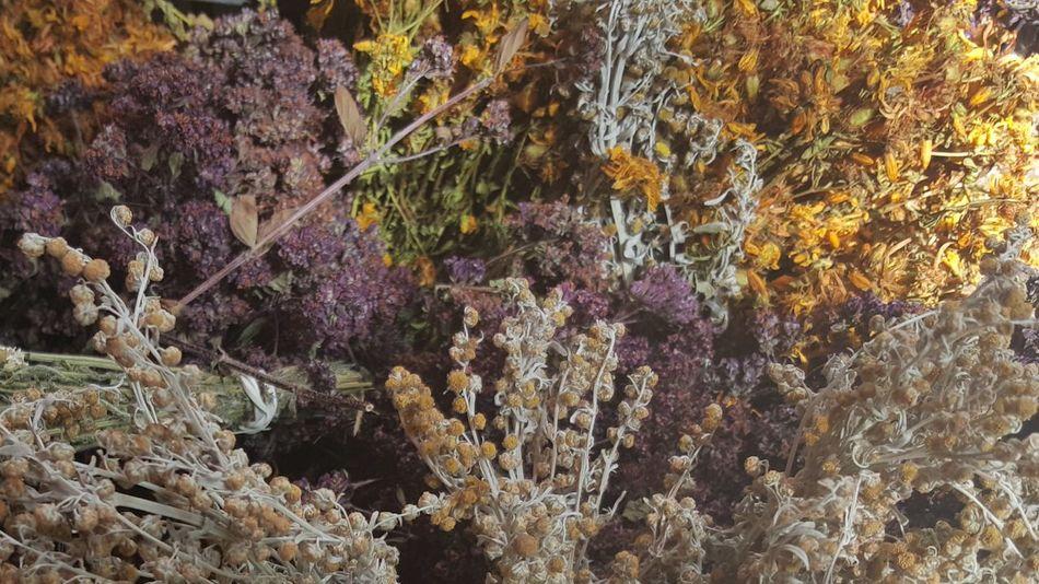 Eyem Nature Lovers  Beauty In Nature Mountain Tea Botany Herbaltea Herbal Medicine Colors Of Nature Natural Colours Naturaleza🌾🌿 Summer Durmitor Montenegro Beautiful Nature Montenegro2016 Nofilternoedit Samsung Galaxy S6 Edge Nofilter