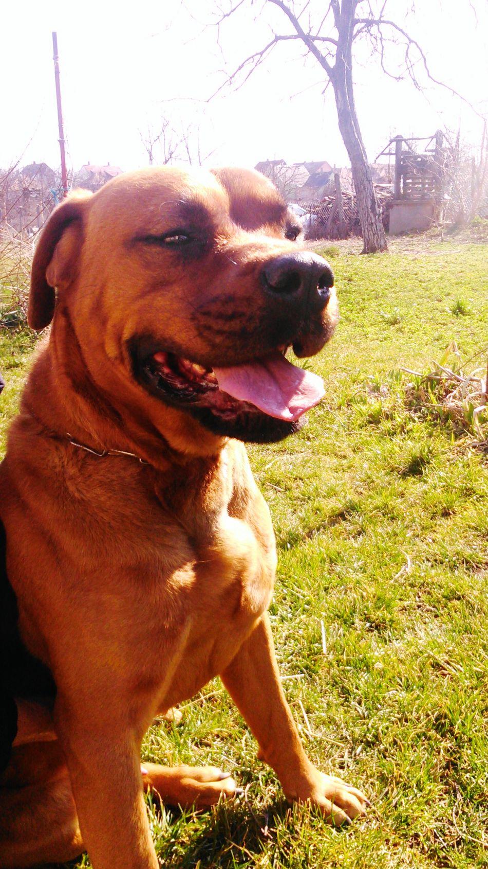 Dog Dog Love Nature Animal