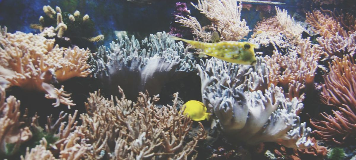Saltwater Saltwater Aquarium Saltwaterfish Aquarium Saltwatertank Yellow Fish Coral Corals