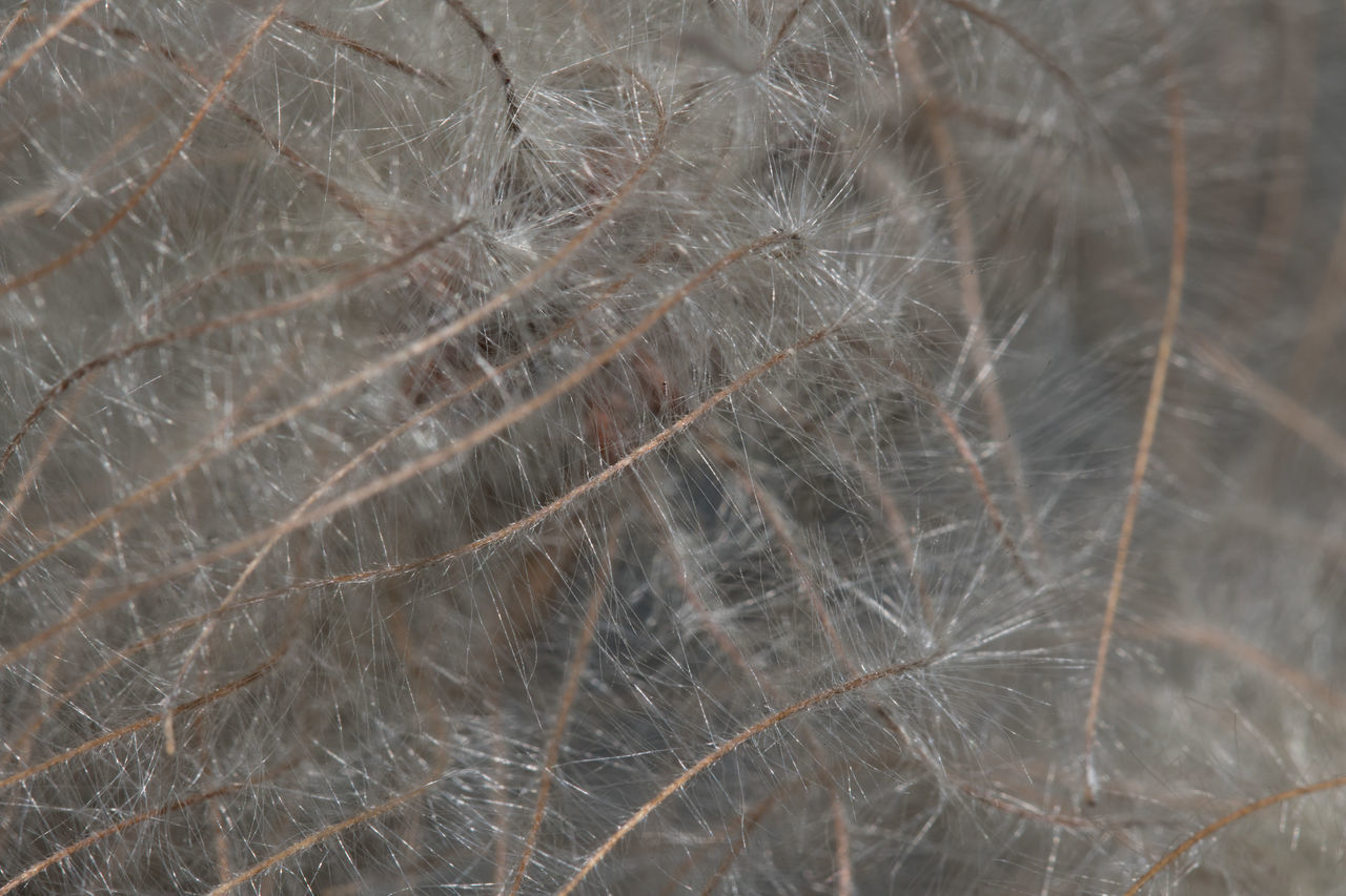 Close Close Up Close Up Photography Close-up Close-up Shot Closeup Closeupshot Day Macro Macro Beauty Macro Nature Macro Photography Macro Week Macro_captures Macro_collection Macro_flower Macro_perfection Macroclique Macrophotography Nature