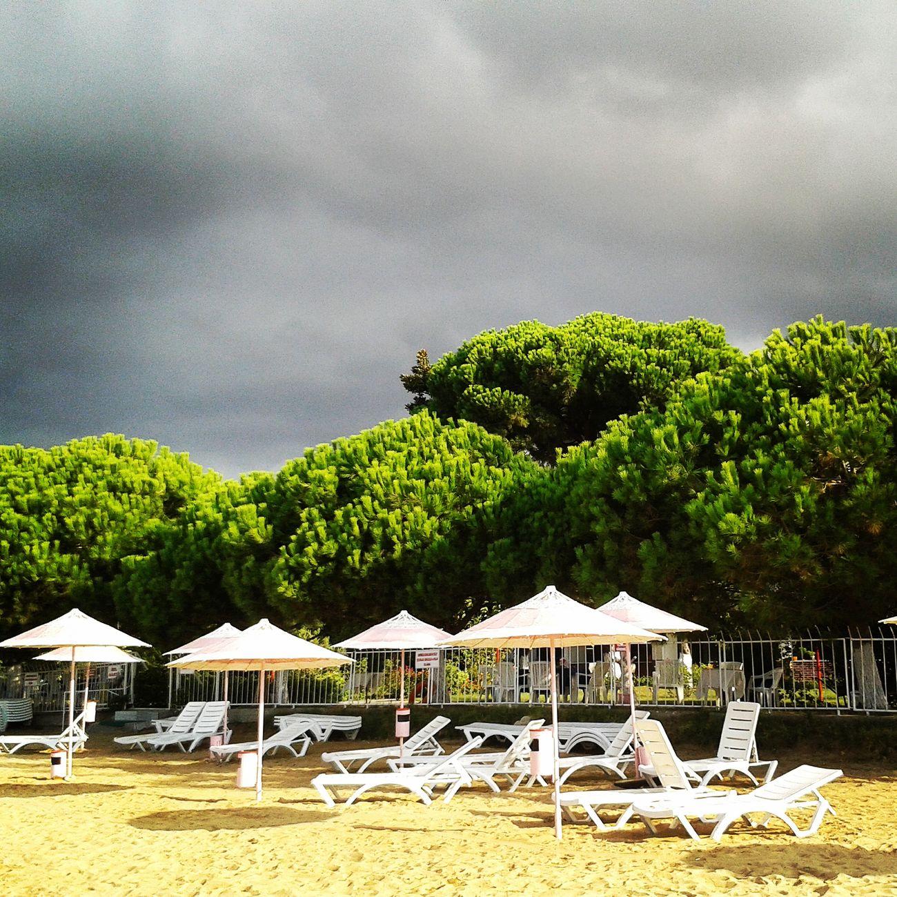 Beach Tree Nature Sun&Clouds