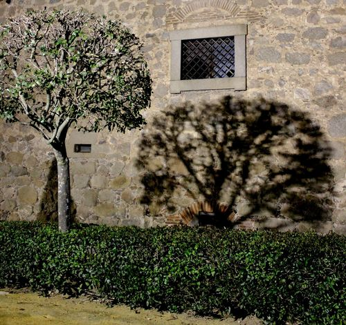 Green Grill Night Shadows Outdoors Stone Wall Stones Tree Wall Window