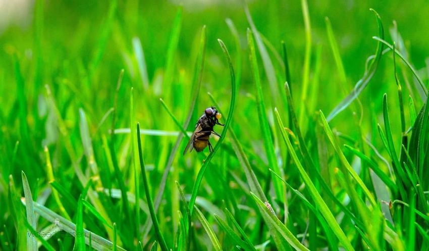 Taking Photos تصويري  الطبيعة People Photography