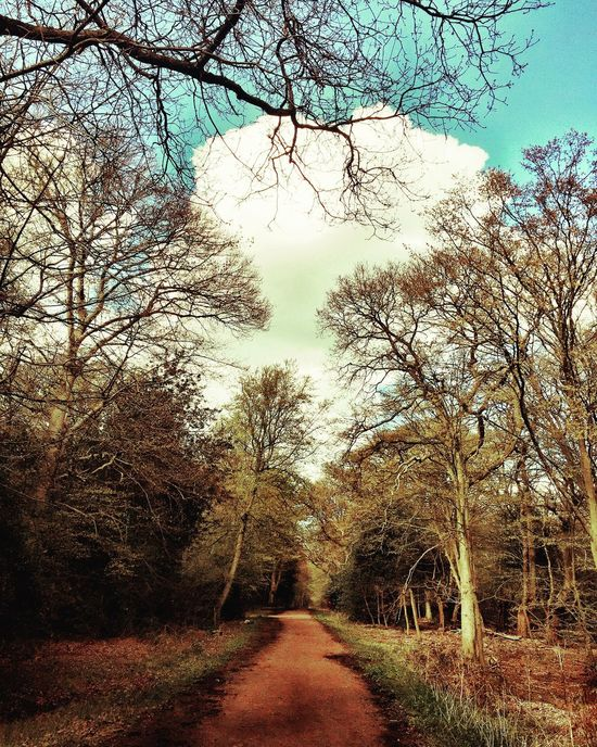 Forest Eppingforest Blue Sky Clouds Clouds And Sky Trees Sky Landscape Eyeem Market EyeEm EyeEm Gallery Eyeemphotography