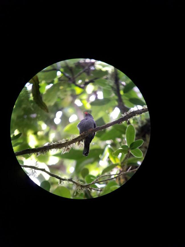 Bird Black Background Close-up Costa Nature Nature Wild Wildlife